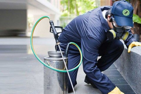 home inspections and pest control treatments from Dan Purkis