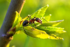 Ant Pest Control Gold Coast